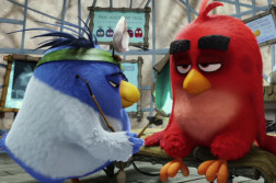 Angry Bird video