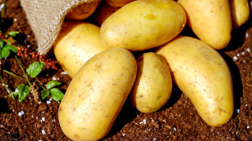 20 years: The Potato Revolution