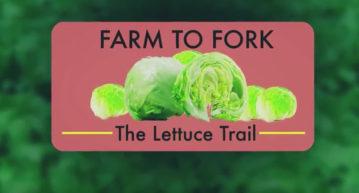 Lettuce Trail