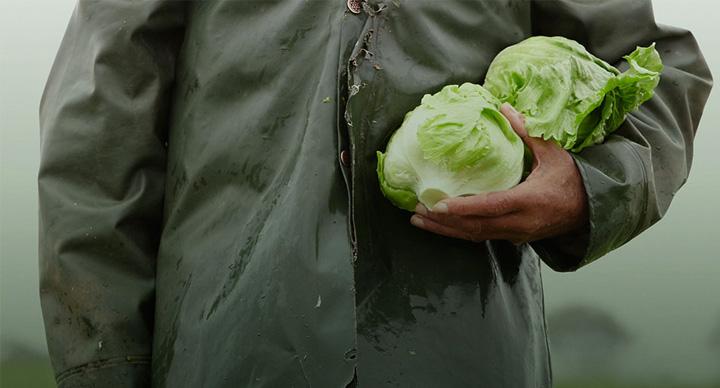McDonalds Lettuce Supplier